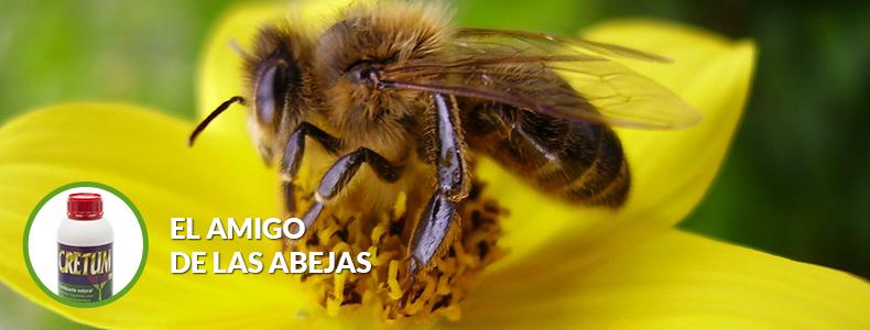 cretum-el-amigo-de-las-abejas