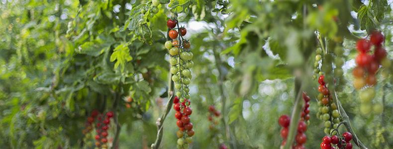 Síntomas-de-la-falta-de-nutrientes-en-las-plantas
